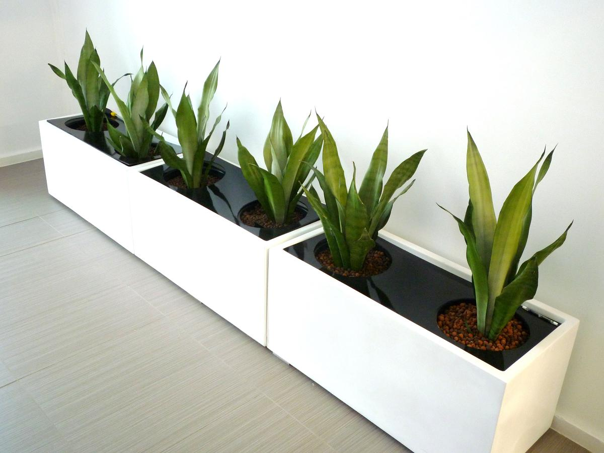 indoor planter boxes