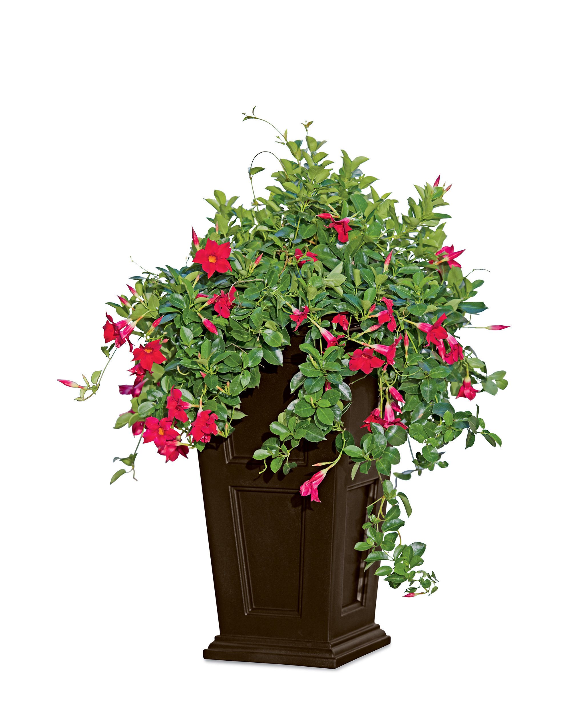 Decor Fabulous Tall Planters For Cool Garden Decoration