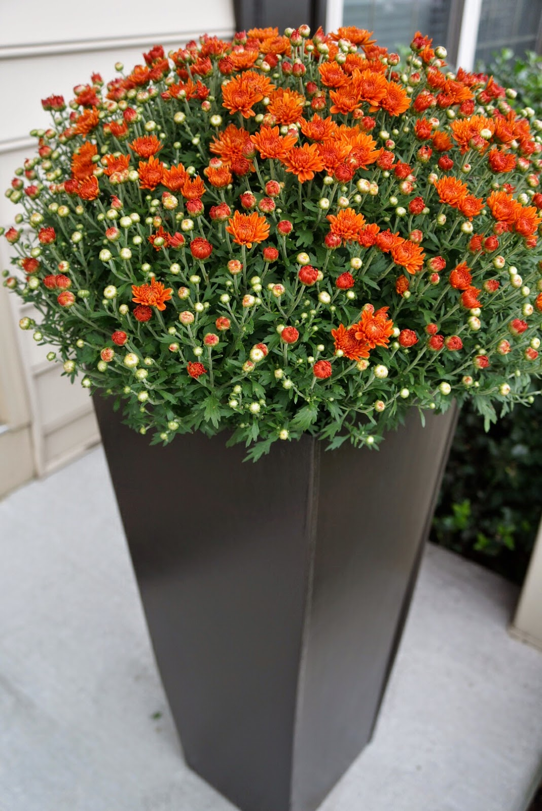 Flower Baskets Homebase : Tall planters shallow planter flower pot stand decor